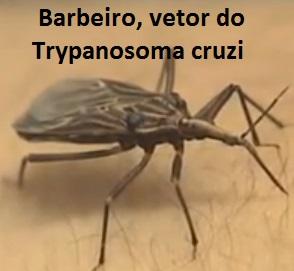 Doença de Chagas resumo