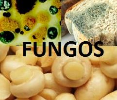Importância geral dos fungos